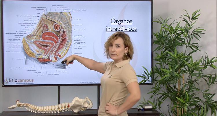 Anatomía, fisiología y fisiopatología del suelo pélvico ...