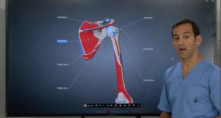 Anatomía muscular del manguito rotador - Anatomía y Fisiología ...