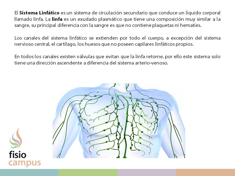 Conceptos, principios y métodos del drenaje linfático manual (DLM ...