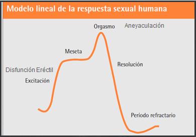 ciclo de prueba de disfunción eréctil