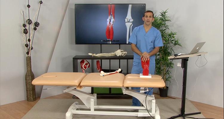 Revisión anatómica del hueco poplíteo - Anatomía y Fisiología ...