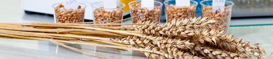 Celiaquía, sensibilidad al gluten no celíaca y patología lumbar