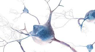 Neurociencia: prevención y funcionalidad en el deportista