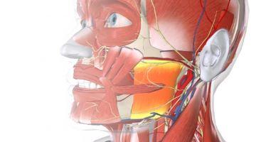 Terapia manual del complejo cérvico-craneo-mandibular (CCM) - Barcelona