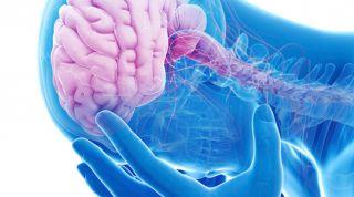 Importancia del conocimiento de la neurofisiología del dolor en fisioterapia