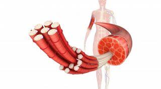 Papel de la fisioterapia en el tratamiento de trastornos de la fascia