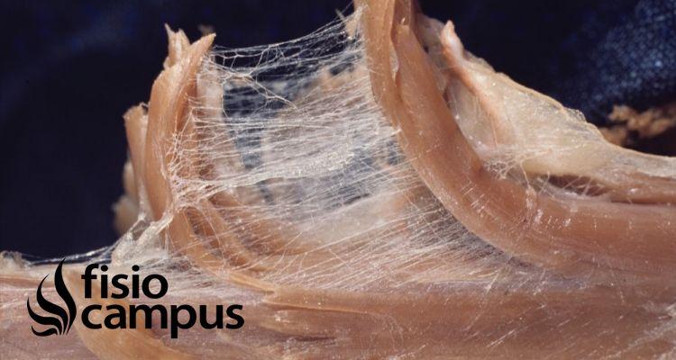 Emisión de biofotones y sonidos ajustables: nuevas perspectivas del sistema fascial