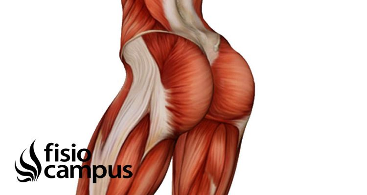Glúteo Medio, entrenamiento y prevención de lesiones | FisioCampus
