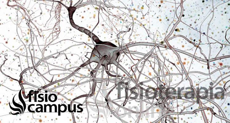 Las lesiones de los nervios periféricos en el miembro superior