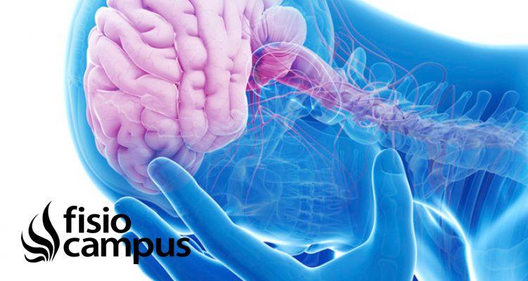 Importancia del conocimiento de la neurofisiología del dolor en ...