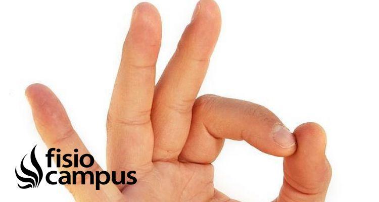 El aparato flexor de la mano: revisión de su anatomía y biomecánica ...