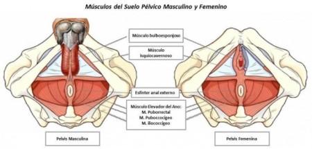 músculos del suelo pélvico en el hombre