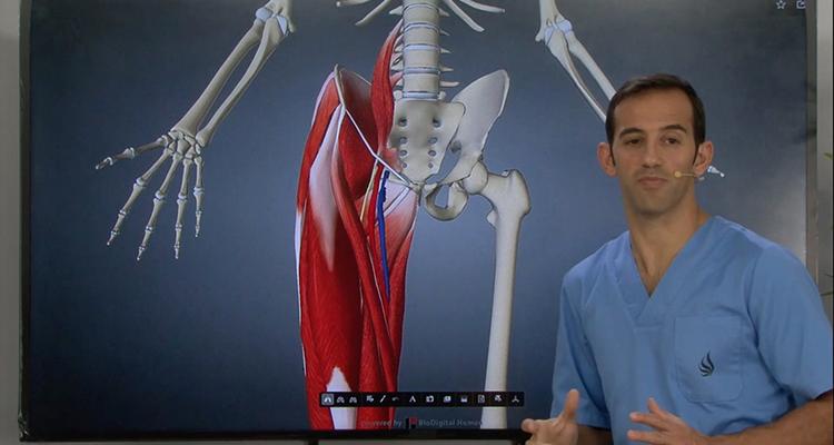 Revisión anatómica del triángulo de Scarpa - Anatomía y Fisiología ...
