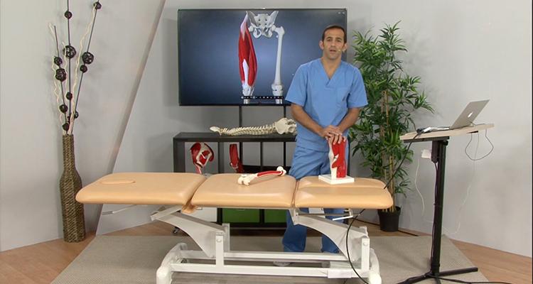 Anatomía de los músculos de la parte anterior del muslo - Anatomía y ...